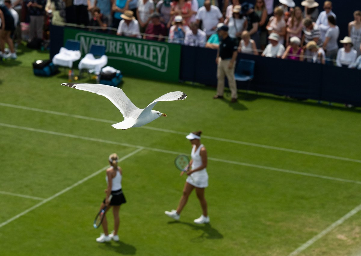 The Eastbourne answer to Rufus...#Wimbledon #NatureValleyInternational