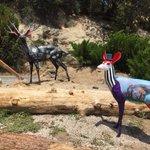 Image for the Tweet beginning: The final painted deer in