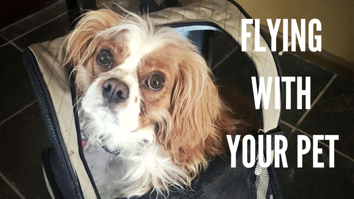 Do you know what to expect when flying with a pet? As a local ticketing and gate agent, Im happy to help you prepare for your pets first flight and leave you stress free on your day of travel!  http://bit.ly/FlyingwPetrw   #nonrevlife  #traveltips  #pettravel  #traveltuesday