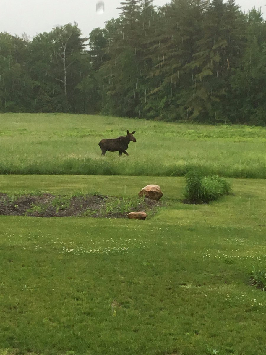 We had a visitor the other day. Possibly looking for his pal Rocket J. Squirrel.