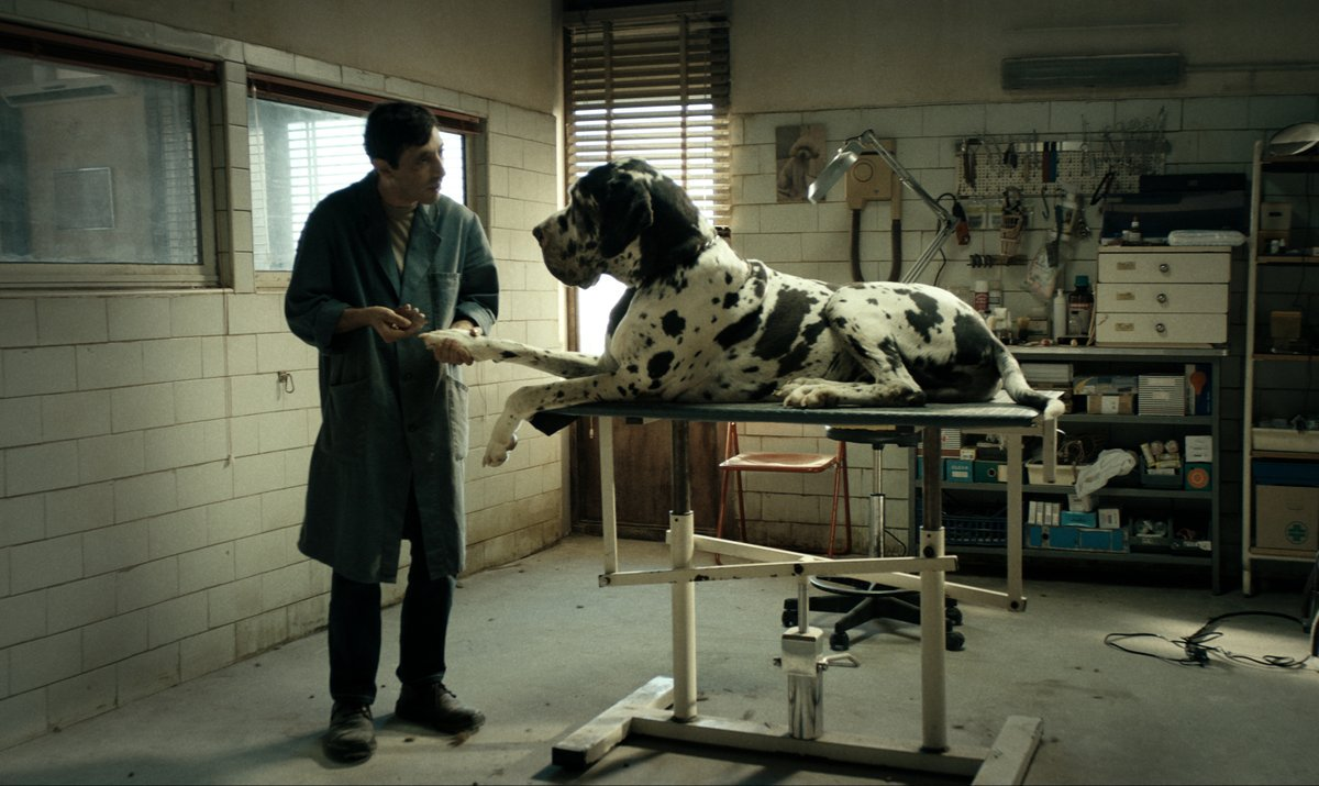 For your consideration: the dogs of Matteo Garrone's DOGMAN. 🐕  Now playing, 🎟s: http://bit.ly/2x9ppye