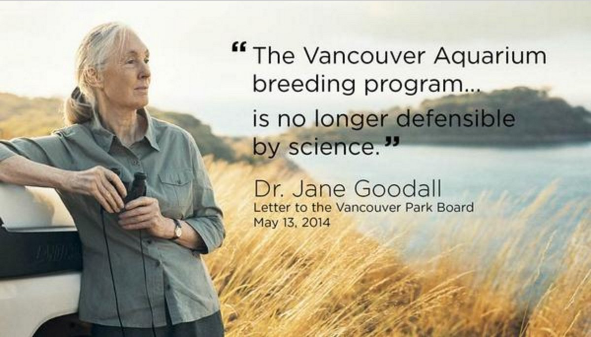 Victory) Vancouver Aquarium agrees to Cetacean Ban in new 35-year Lease Agreement: The first aquarium to put a captive orca on display commits to no longer keeping whales & dolphins and has also agreed to drop its lawsuit against the Vancouver Park Board.  https://www. cbc.ca/news/canada/br itish-columbia/vancouver-aquarium-drops-cetacean-ban-lawsuit-against-vancouver-park-board-1.5189507   … <br>http://pic.twitter.com/opy3HOAUQW
