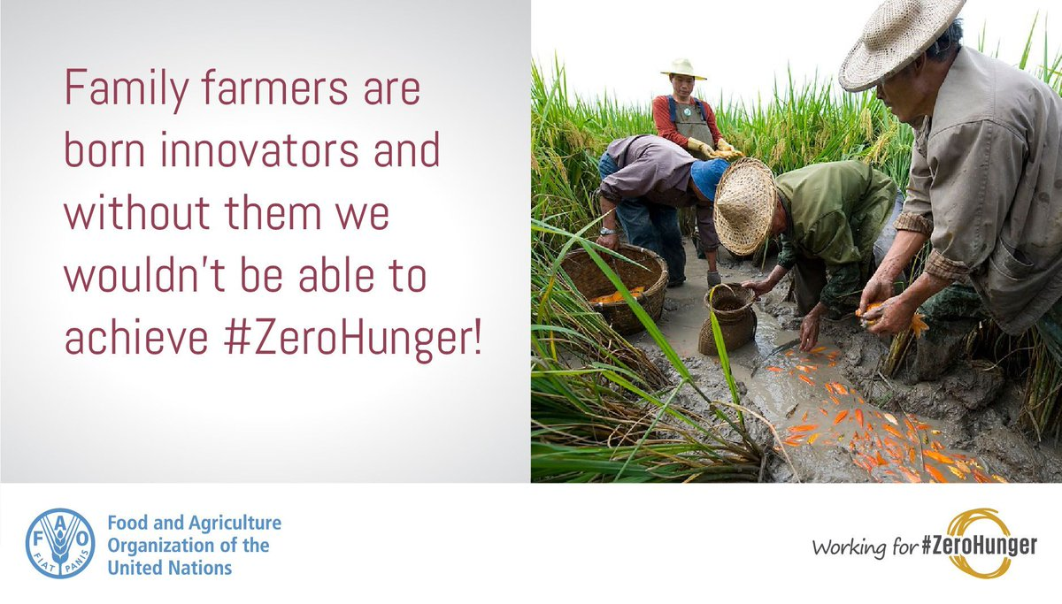 👩🌾Family farmers have been innovating for thousands of years.👨🌾    Today, investing in innovation and family farmers is more crucial than ever.     We can't achieve #ZeroHunger without them.     #AgInnovation #FutureofFood