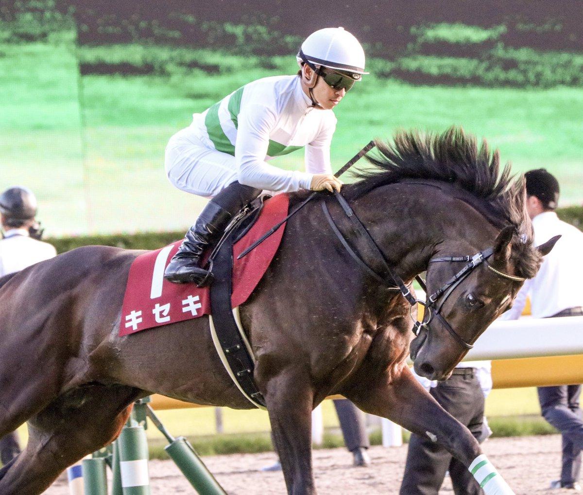 キセキ凱旋門賞挑戦表明記念✨ 返し馬が好きなのは、キセキとアエロリット。 やってやる気満々の気迫溢れる返し馬はヒヤヒヤでドキドキです💘 凱旋門賞の返し馬はどんな感じになるんだろうな☺️ ※写真は毎日王冠