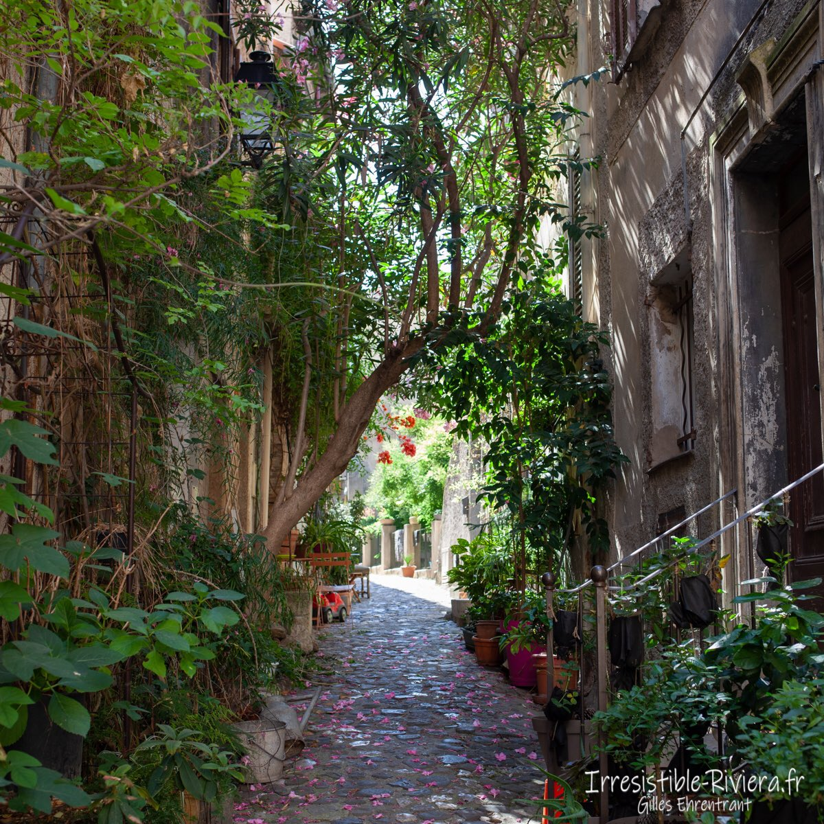 🇫🇷 #Climatisation naturelle de nos anciens : ruelle à l'ombre du #cagnard et de la #canicule avec un peu de végétation salvatrice. 🇬🇧Natural air conditioning of our #ancestors: shade and vegetation.   #CotedAzurFrance #FrenchRiviera #France #ExploreNiceCotedAzur #ecologie #clim