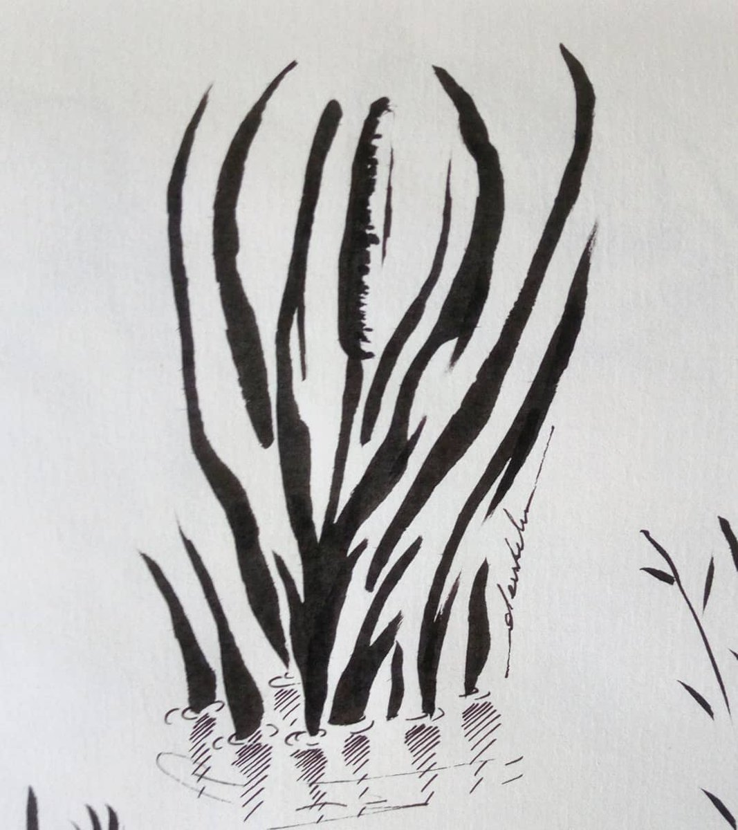 Reeds, research #dailyart #dailyillustration #nature #reeds #artstudy #comicbookproject https://t.co/WCbnTK9Lm6