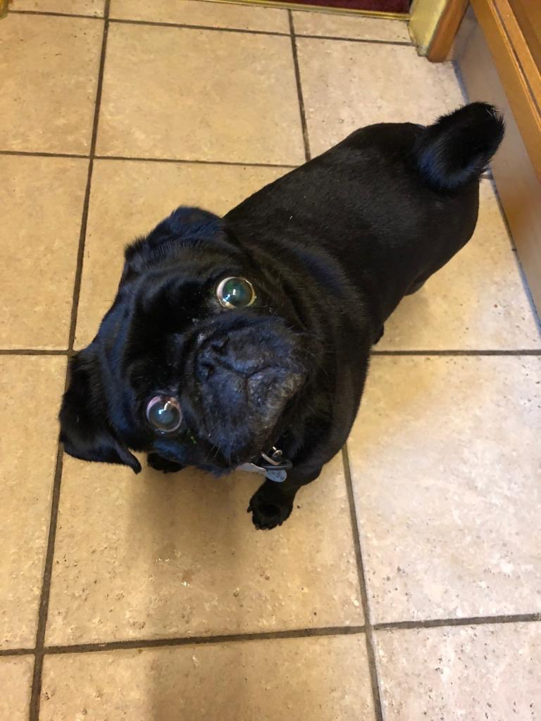 Hello my Twitter family. I be waiting for my dinner while my bro be ranting on about something. If he doesn't hurry up I be getting a stiff necks here. Pfft. What be the problem just give me my food before I wastes away. I is starving here. Pfft happy Friday all love Alfie <br>http://pic.twitter.com/R6vJhadYCB