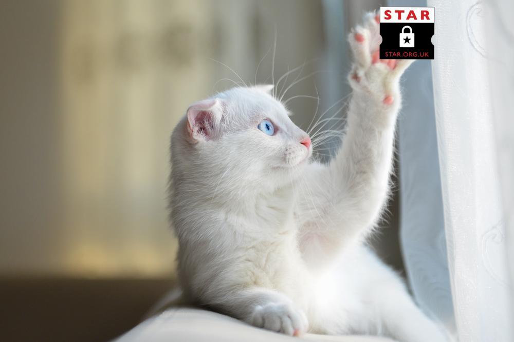 STARticketing photo