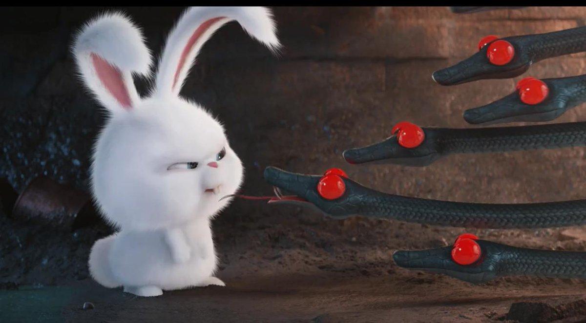 Смешные картинки с кроликом из мультика тайная жизнь домашних животных, бумаги открытка сердечком