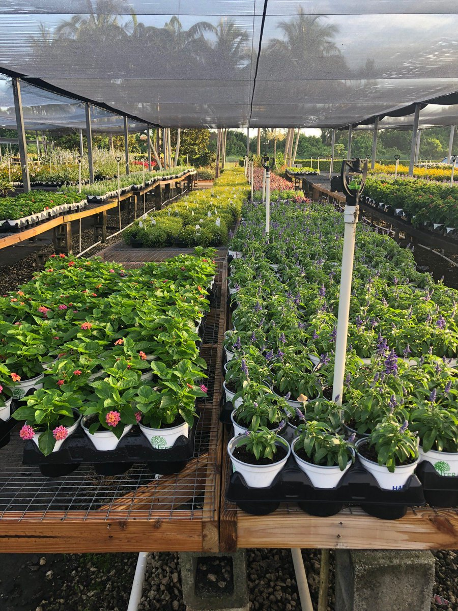 The Plant Nursery At Habcenter