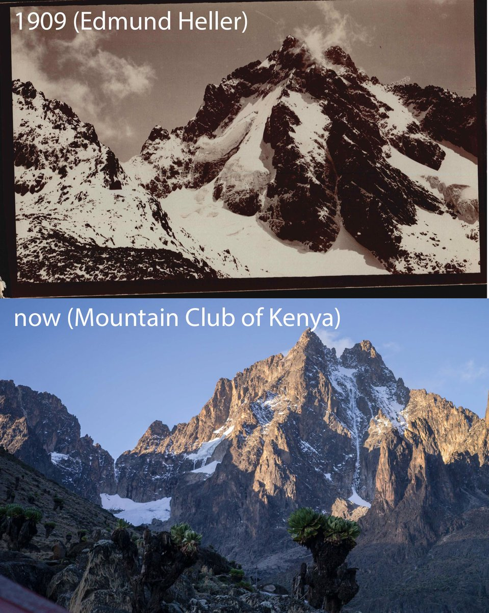 Ive been doing some archival work, digging through historic photos from the @NMNH Roosevelt Expedition. I found this amazing photo of the summit of Mount Kenya, taken in 1909, and wanted to compare it to a recent summit photo. The glacial loss is striking...#climatechange