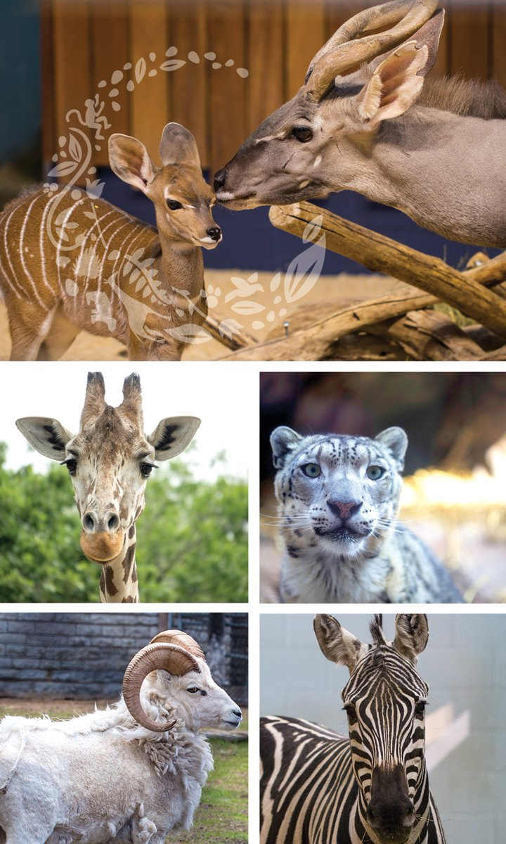 Happy Father's Day to all of the @Comozoo dads!