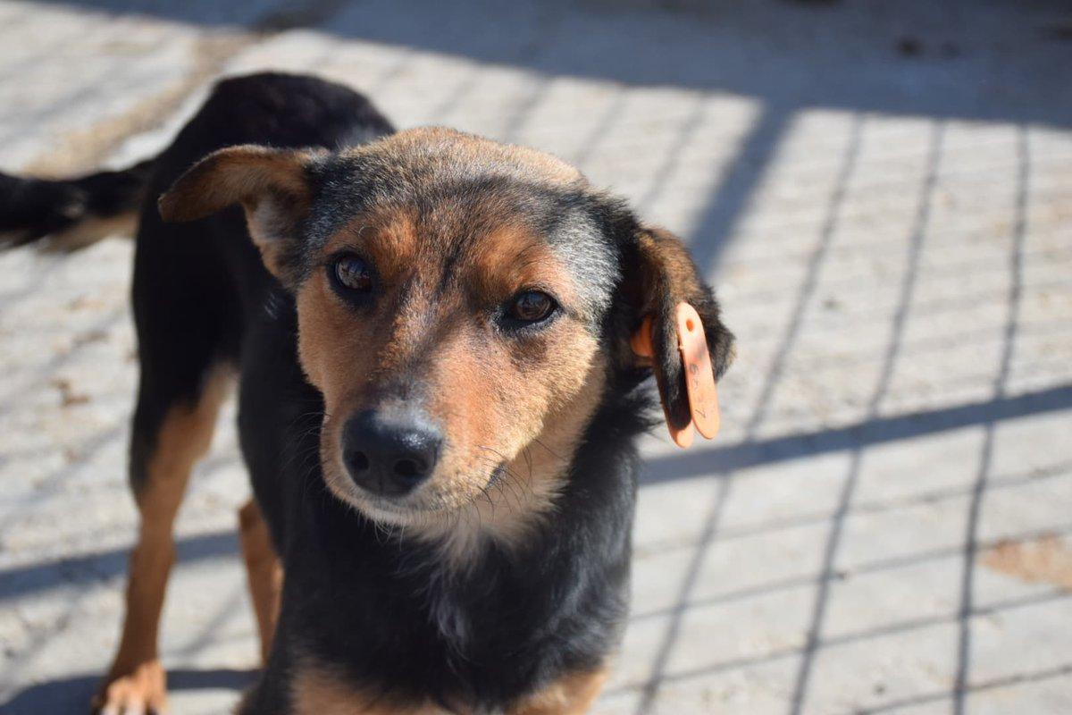 International Dog Rescue on Twitter: