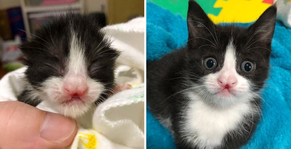 Kittens found outside after a storm - one of them has a butterfly-shaped nose. See full story and video: lovemeow.com/kitten-storm-r…