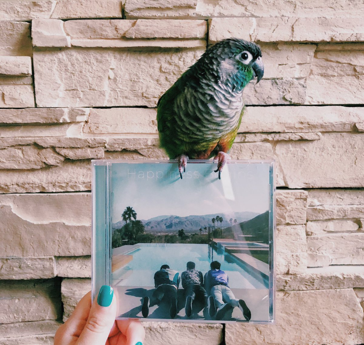 So happy to finally have a physical copy of #HappinessBegins! My bird, Maui, grew up listening to the @jonasbrothers, so he dances ~every single time~ their songs come on <br>http://pic.twitter.com/tFJfEvruYI