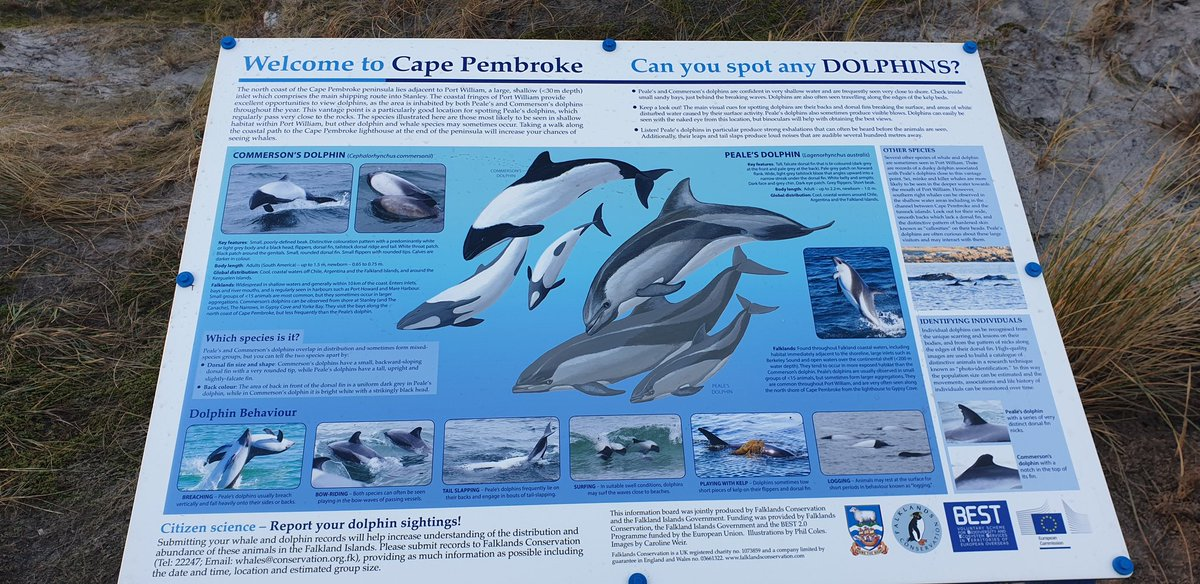 Loving the new information board on the way to Cape Pembroke - also looking forward to helping out with the #dolphin watch  #falklands<br>http://pic.twitter.com/zQG2zyESUY