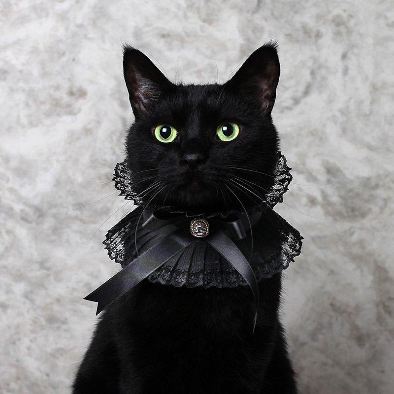 リボンとソフトチュールプリーツのブレードで首輪を作りました。 黒猫さんはビクトリアン朝の襟がよく似合う。
