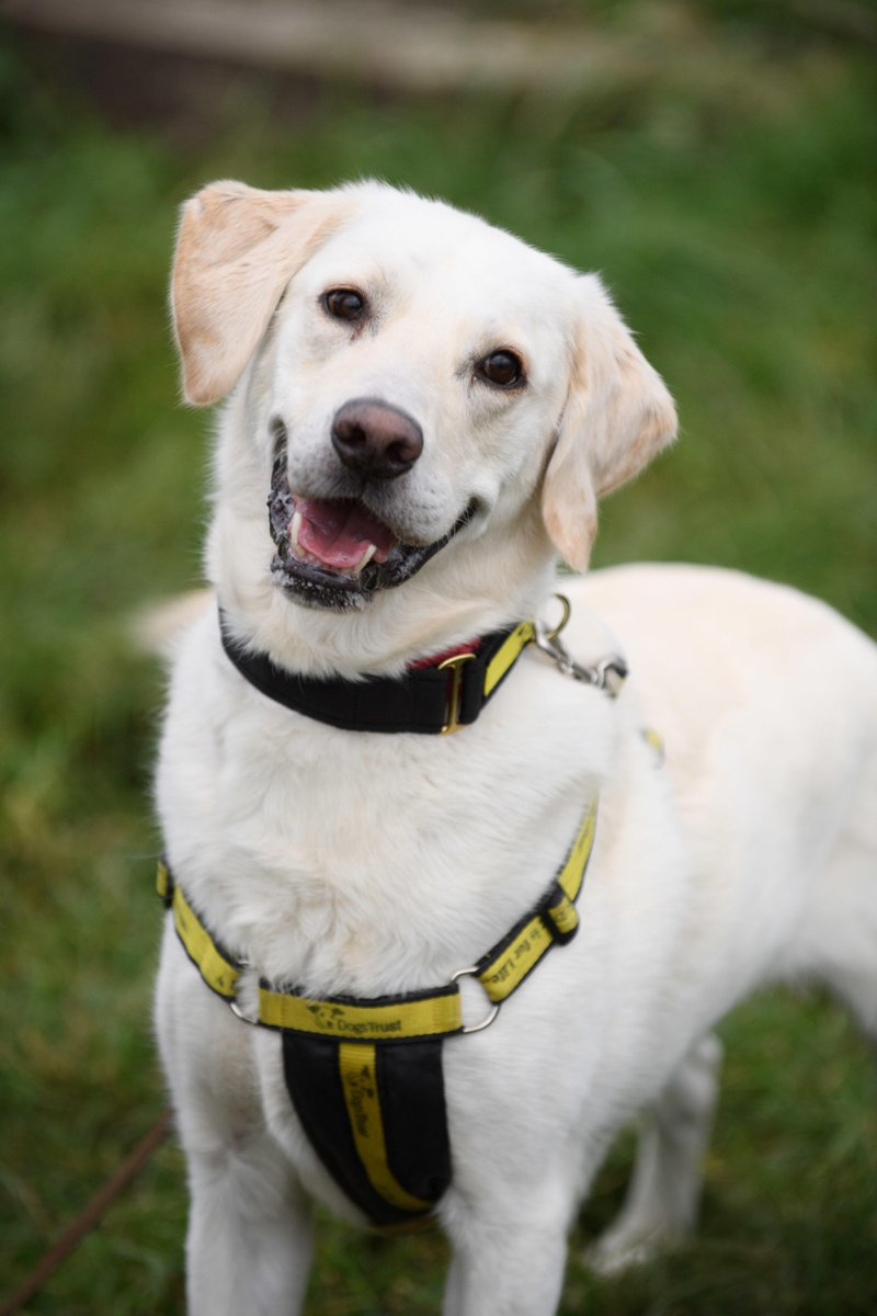 #SponsorDog Sheldon has been rehomed! 🙌 Hes found a lovely family nearby with a big garden so he can roam till his hearts content 🐶 Hes also made best pals with the familys other dog so has someone to play with! Were so glad hes found his forever home 😍 @DT_Harefield