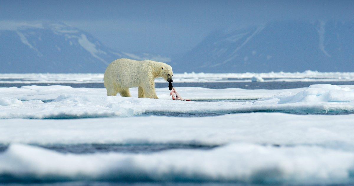 RT @ht_mail_ru: Ледяная схватка держав. Ждёт ли Арктику гонка вооружений? https://t.co/HlQzTxvhdQ https://t.co/RNNXaWqJ9d