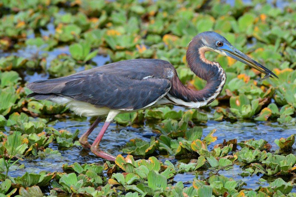 Readers' wildlife photos https://whyevolutionistrue.wordpress.com/2019/06/15/readers-wildlife-photos-835/…