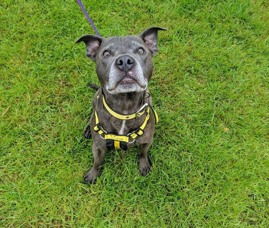 What a seriously cute snoot! 🐶 Meet Doc, a handsome boy who enjoy walks and loves a good fuss. Hes hoping for a calm home where he can be his most happy, wiggly self! 💛 Find out more about Doc at @DT_Newbury 👉 fal.cn/sSQv
