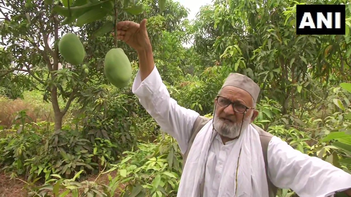 """Lucknow: Padma Shri Haji Kalimullah Khan, a mango grower also known as 'Mango Man', has grown a new variety of mangoes&named them after HM Amit Shah. He says, """"People come&go but fruits will stay. I'm naming them after good men so that people remember them even when they're gone"""""""