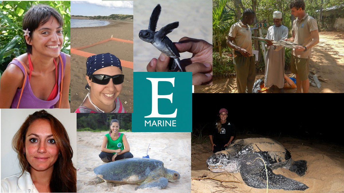 Celebrating #WorldSeaTurtleDay with a blog profiling 6 of our excellent @ExeterMarine  early career researchers in a blog @CasperGeer @arcpatricio  @cerenbarlas @JuliaCHaywood @Lilipcolman @Ana__Nuno of our   LINK: http://blogs.exeter.ac.uk/exetermarine/2019/06/10/happy-seaturtleweek-check-out-these-turtle-y-awesome-sea-turtle-researchers/?fbclid=IwAR04Qdbma1GSvOM4TEuueuJl-CXOmbU4ghhhw-_Wx6naZ44TDYedZxhBXTY…