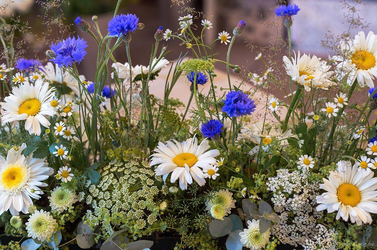 фото полевых цветов в хорошем качестве испытательном