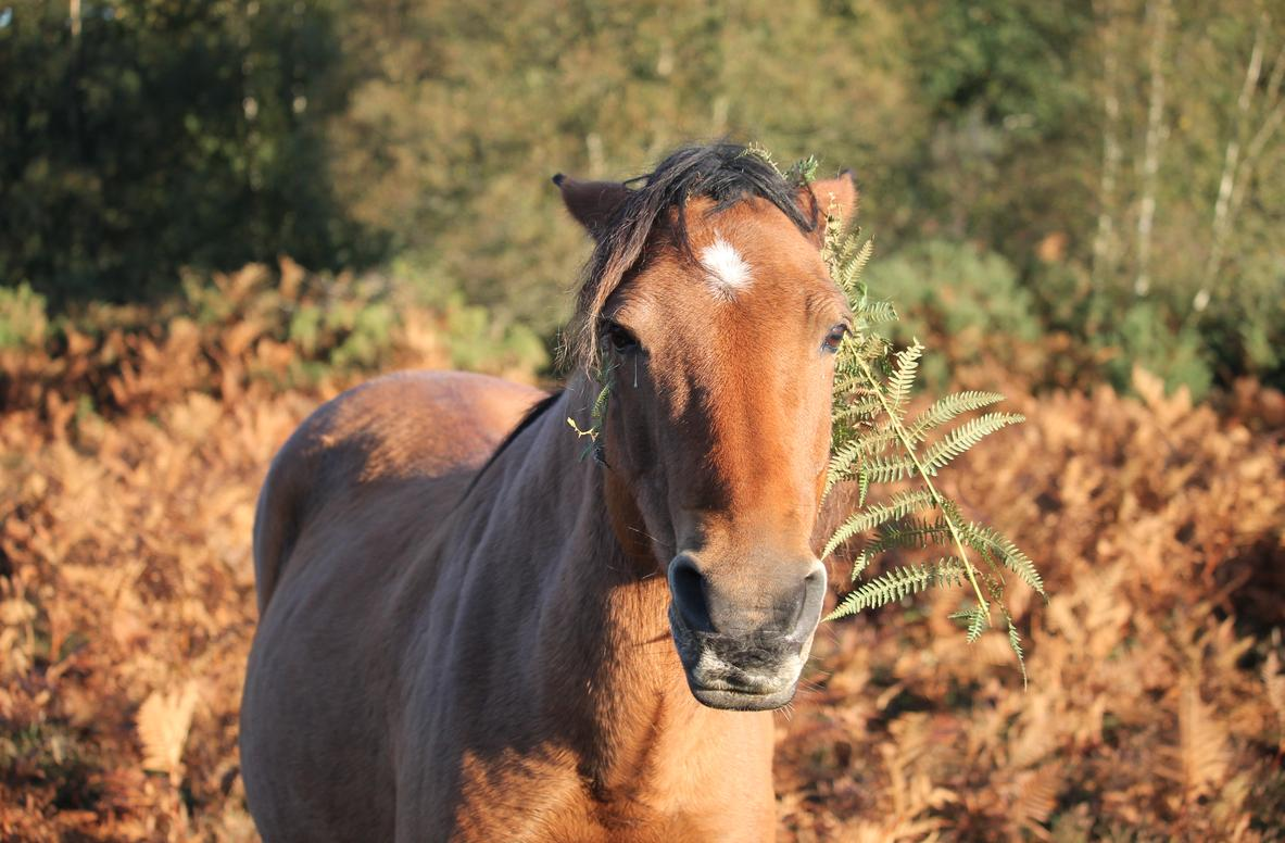 Please do not attempt to stroke or feed the free-roaming #NewForest ponies. They can be unpredictable and very grumpy! <br>http://pic.twitter.com/Z4huhMhjzg