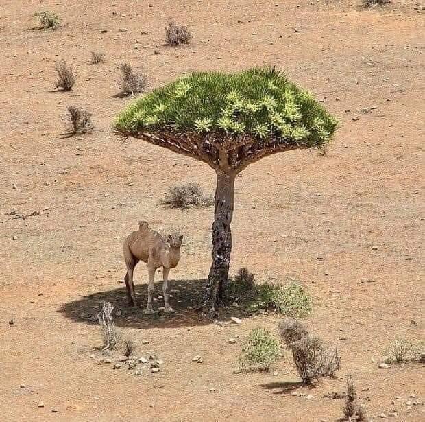 چھاوں دیتے ہیں جو صحرا میں کسی کو   دِل میرا ایسے درختوں کو ولی کہتا ہے🌾