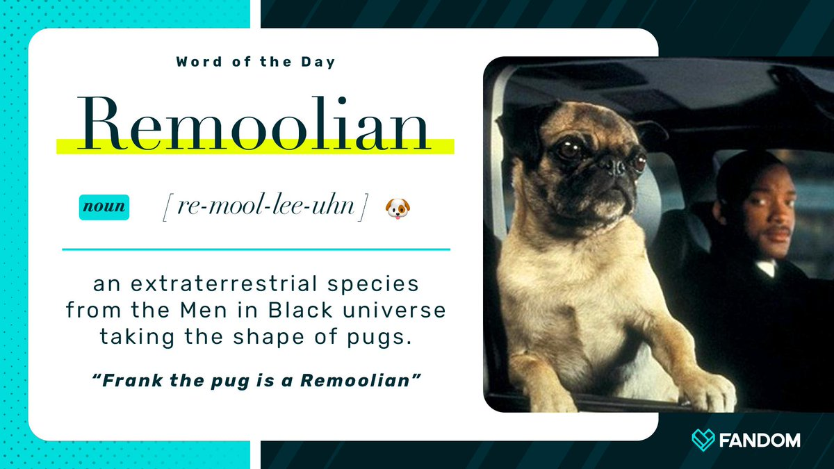 Between Remoolians and Flerkens, be careful out there 🐶😺 Learn more: meninblack.fandom.com/wiki/Frank_the…