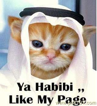 A thread of animals wearing Hijab, mostly cats cuz why not <br>http://pic.twitter.com/FJHwS9RN88