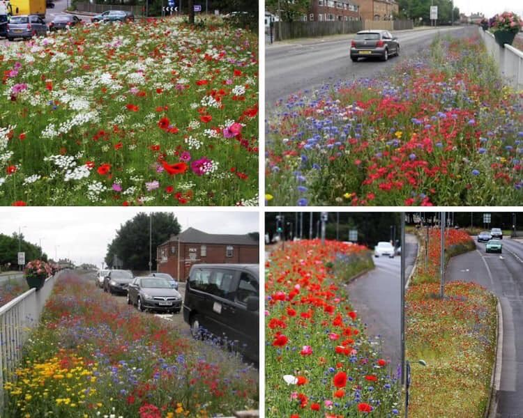 This is Rotherham where council have planted 8 miles of wild flower verges. It has saved 25k in mowing costs. These photos posted by British Beekeeping Association!