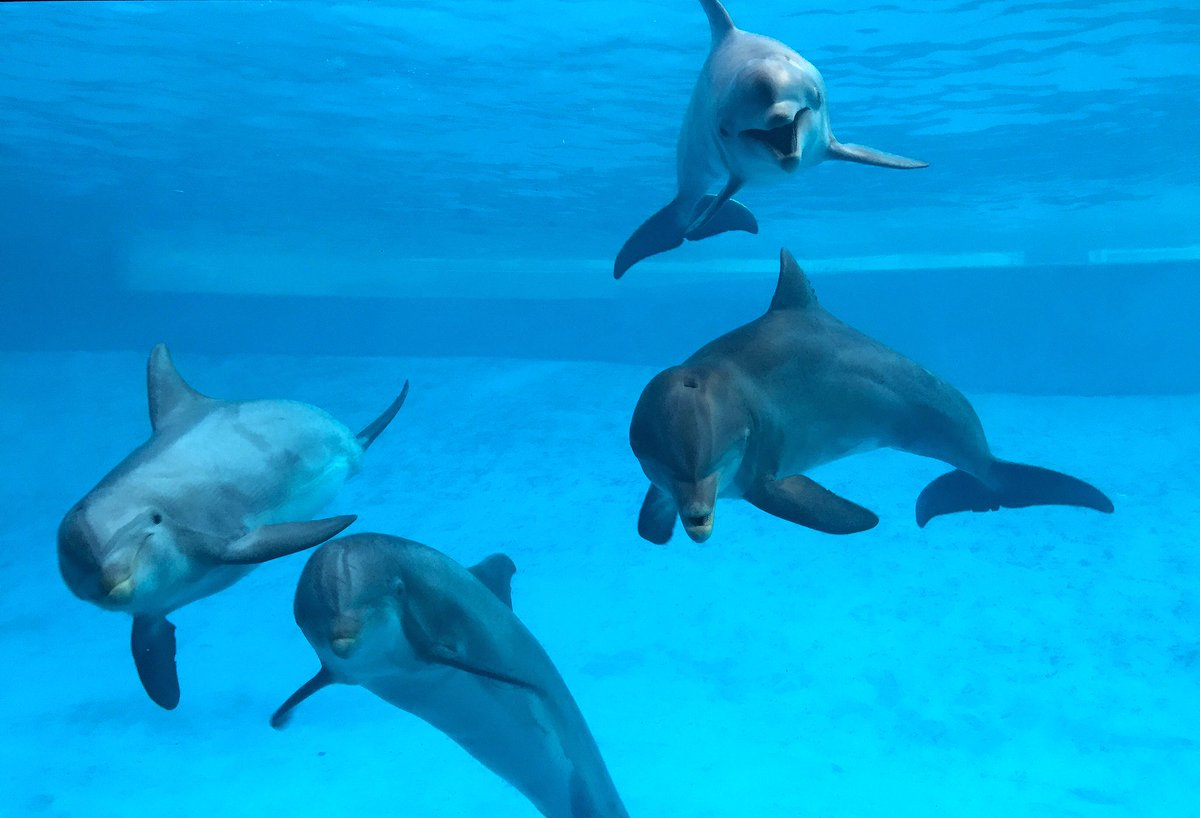 Move like a dolphin! Play like a dolphin! Even speak like a dolphin! Dancing Dolphins from @TXStateAquarium is a highly engaging program during which students learn what it takes to be a marine mammal! http://bit.ly/2BS5vx0 #k12 #education #STEMed