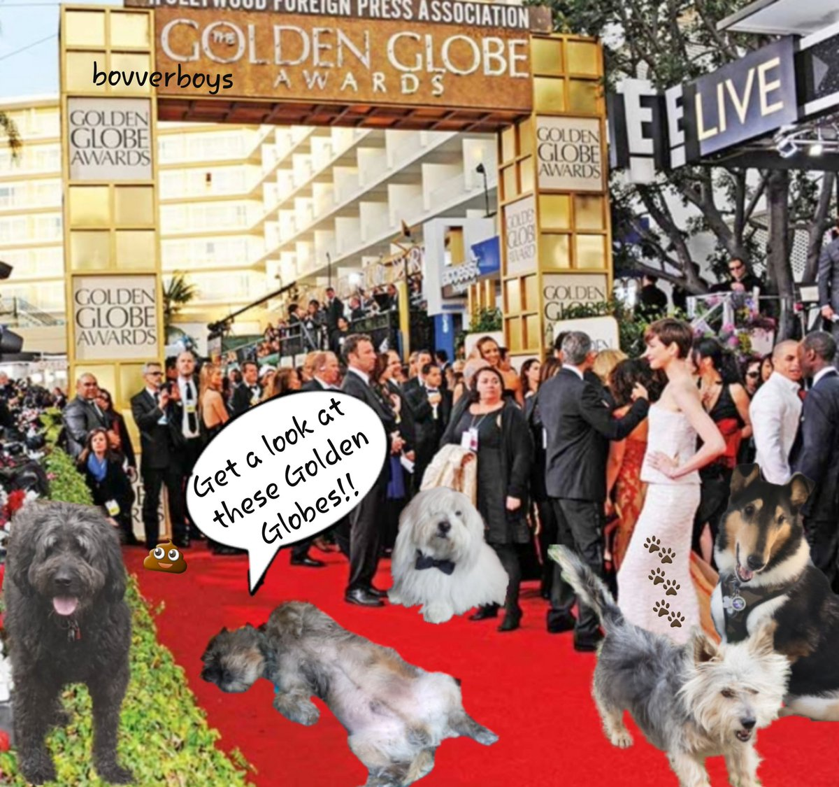 Golden Globes??? If yer want to see some golden globes then take a look at these beauties!!!! #GoldenGlobes #TheRuffRiderz #BovverBoys #Hollywood @jennystape  @CollieTwiggy @OscartheDog_ARM @LJ_doodle #AiringYerBits<br>http://pic.twitter.com/4HpQ9G4ZsZ