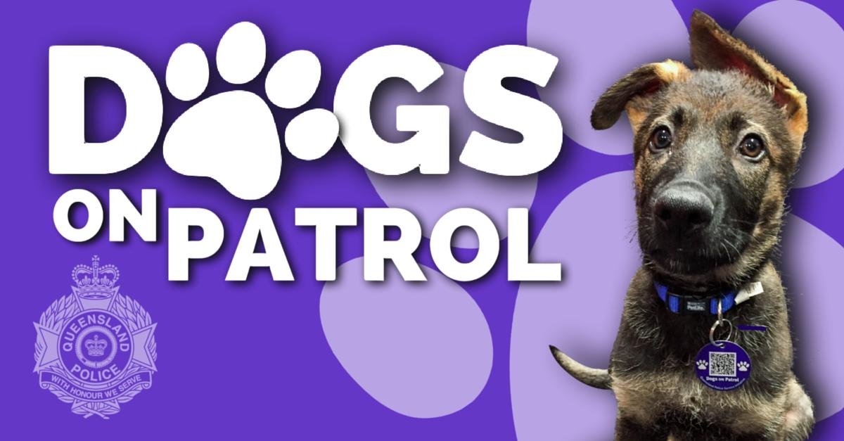 A #QueenslandPolice initiative #DogsonPatrol #Stafford is on TODAY June 16th (2pm-4pm).   Meet the latest #police #puppies in training, visit #dog-related displays & stalls with lots of free offers for you and your dog, including a free engraved #dogtag.  https://www.australiandoglover.com/2019/05/dogs-on-patrol-stafford-2019-june-16.html …