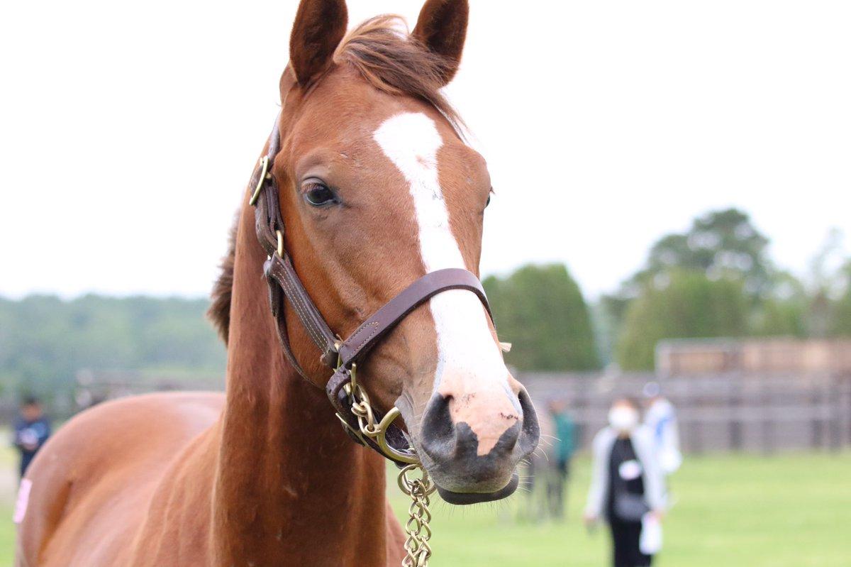 ブエナビスタ18 ブエナビスタとレッドディザイアの3歳牝馬三冠のライバル関係で競馬好きになったからなんか感慨深かった。