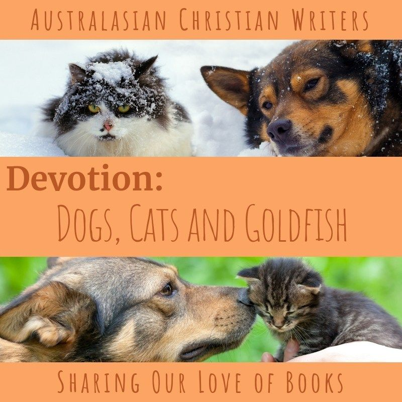 Iola Goulton is sharing at Australasian Christian Writers on Devotion | Dogs, Cats, and Goldfish #ICYMI #WritersLife https://buff.ly/2RbwPdA