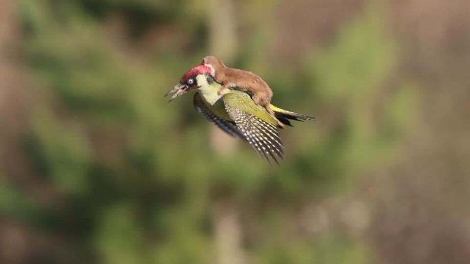 Sometimes you're the woodpecker sometimes your the weasel either lift someone up today and take them for a ride or jump aboard with someone who is flying!#bestquote #PrideMonth2019 #touchthesky #prosperity #hype #happy #successful #destiny #FamilyFirst #DoSomething #GoalOfTheDay