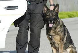 Fouke School District deploys new police dog