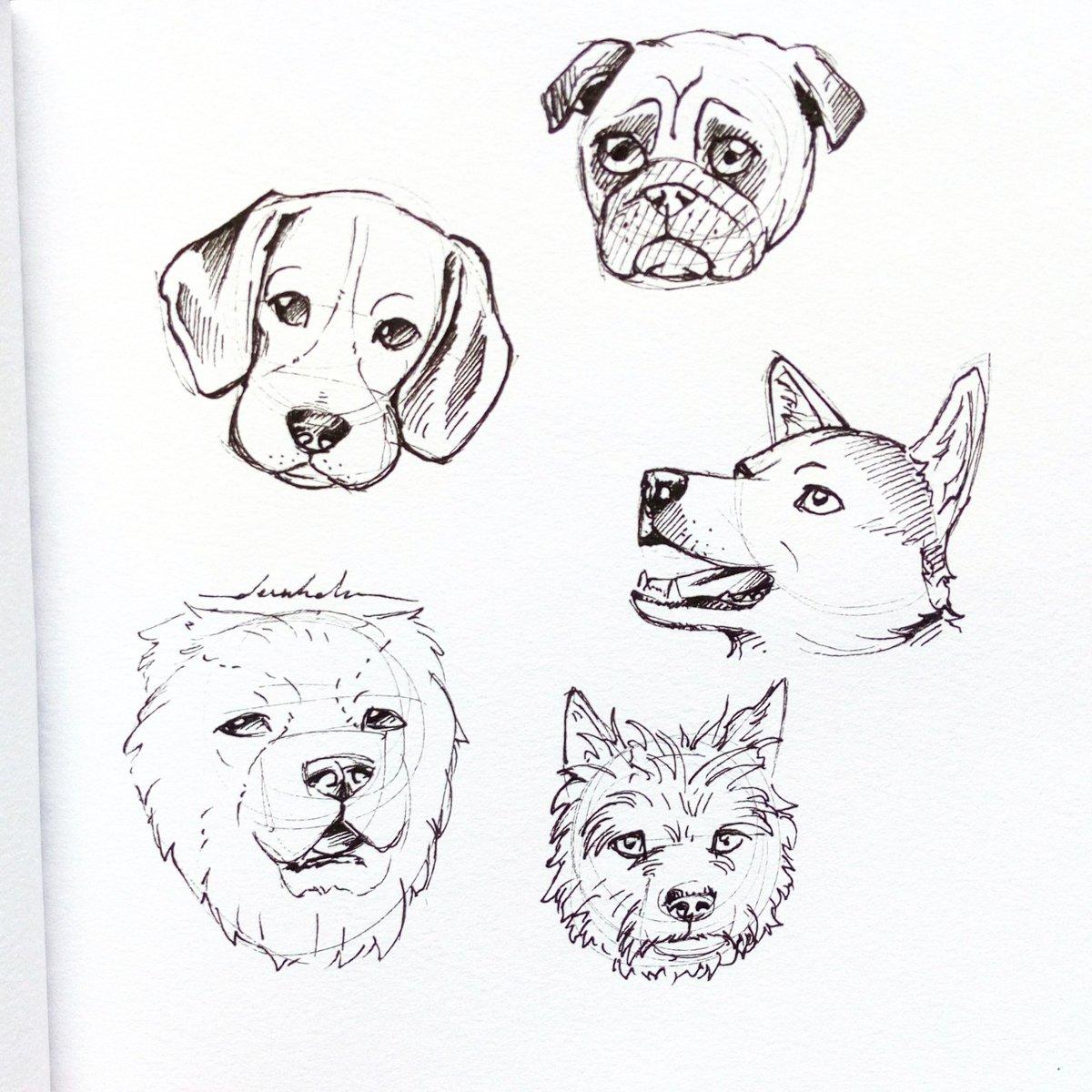Dogs #dailyart #dailyillustration #dogs #dog #pets #animals #blackandwhitedrawing https://t.co/FAqSxQnUcz
