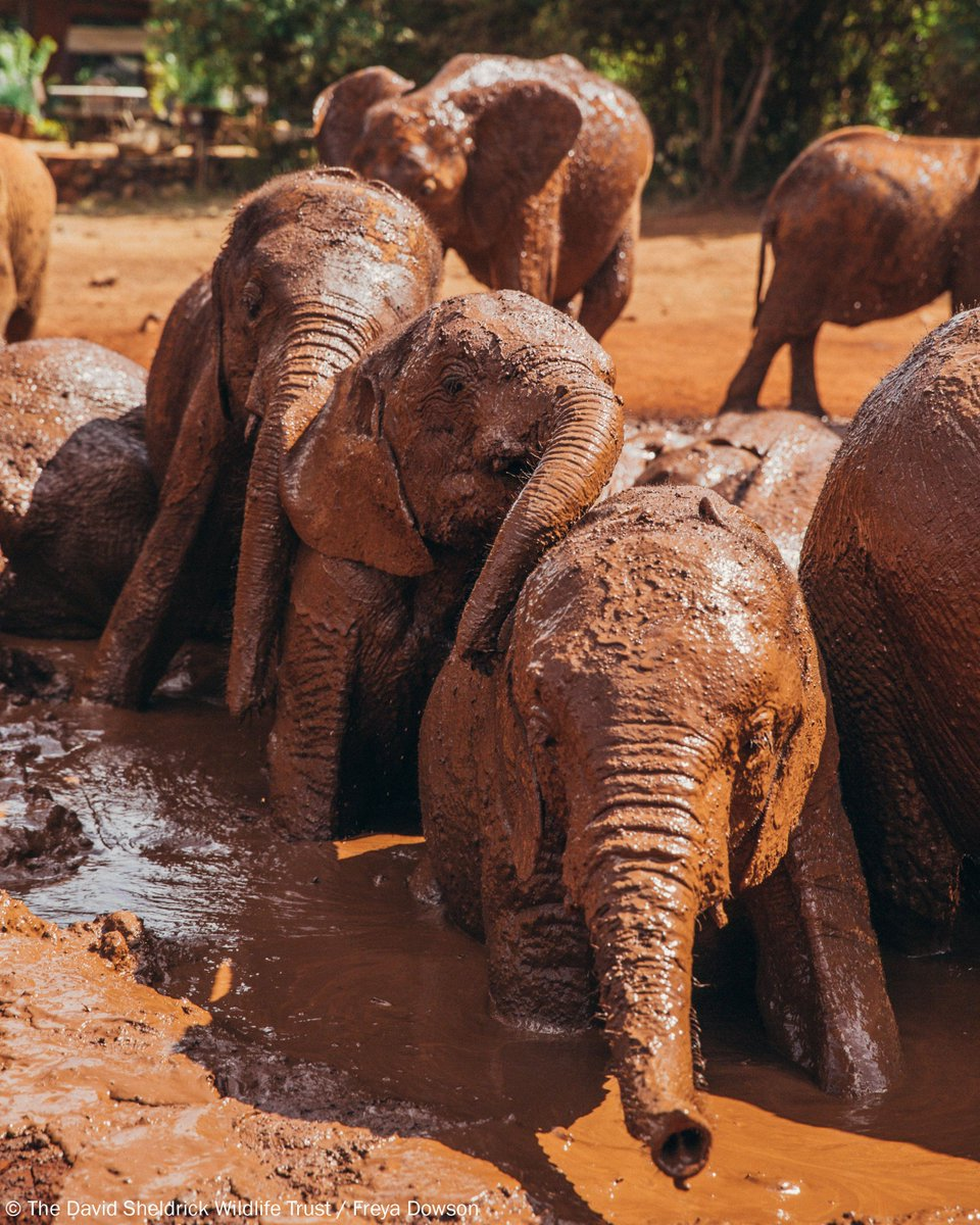 @DSWT's photo on #SundayFunday