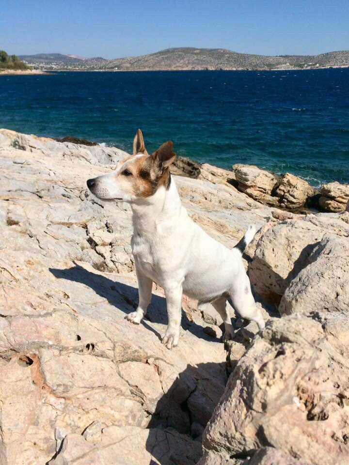 RT @Youtube65011976: 🐕❤️ #jackkrussell #JackRussellTerrier #ilovemydog #petlovers #sun #sea #summer #summervibes https://t.co/XsOnR6qLSS