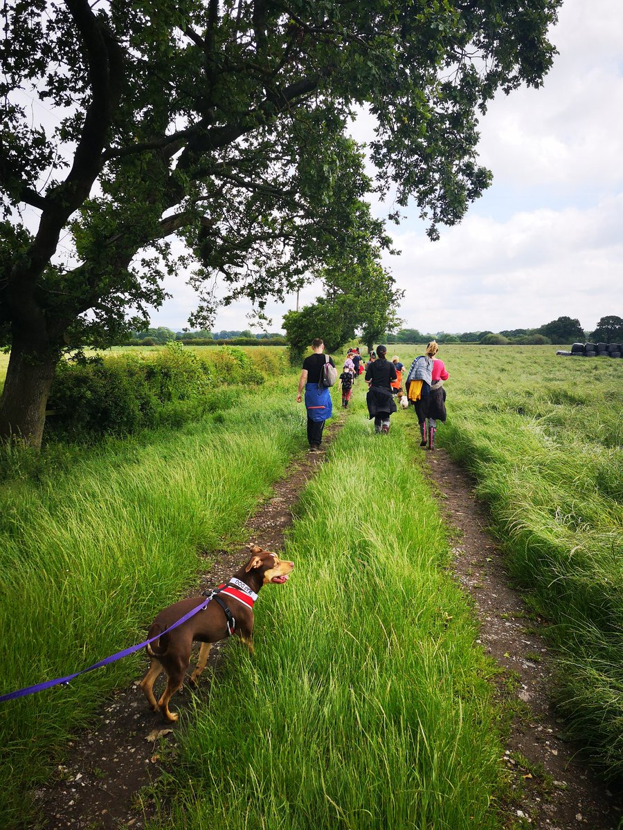 Thanks to Haighton Manor for a great dog walk today! Couldn't have asked for better weather. Cindy did amazing and enjoyed meeting lots of people and dogs! This fantastic dog is still looking for her forever home. If you are interested please check out our website #dogwalk #adopt