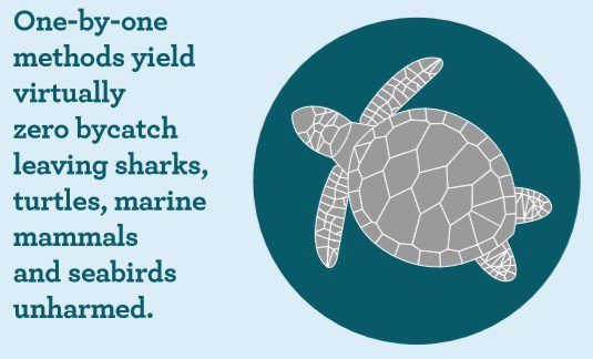 By choosing tuna caught using selective one-by-one methods such as pole-and-line you can help safeguard turtles  #WorldTurtleDay <br>http://pic.twitter.com/z4dyWvDcjG