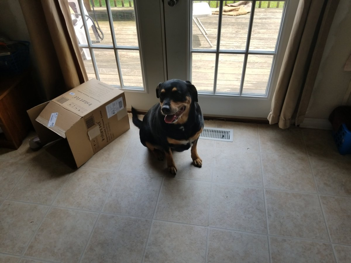 I got a new PUPPER!  Her name is Brenda and she's an 8 year old Rottweiler.