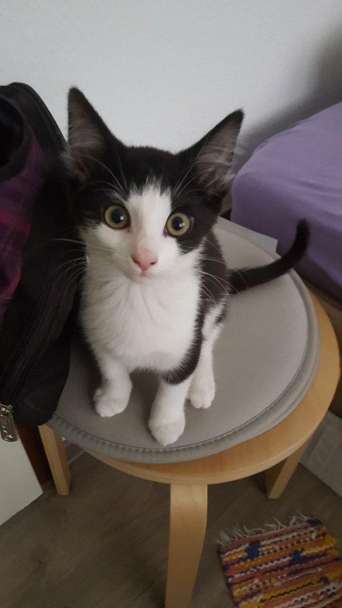 Darf ich euch vorstellen: #baby #Katze Fleur (Ja... Wie Fleur Delacour aus #Harrypotter) https://t.co/diPNs38TmI