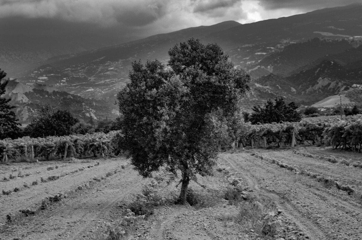 Bugünden; yalnız ağaç. #nikon #nikond3200 #bnw #bnwphotography https://t.co/eG9Q7XbP3I