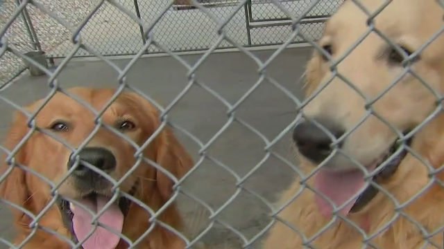 105 dogs seized from New Hampshire backyard breeder, hoarder home 2wsb.tv/2IKCELa