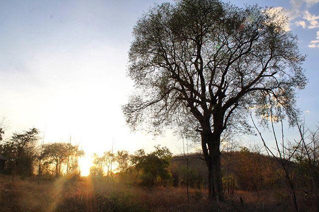 Gorgeous #safari sunsets in #Tadoba. #tigertourtmti #takemetoindia https://t.co/TVTqwKnnKQ https://t.co/4JDZLxYAQO